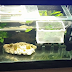 How to Install Cheap LED Lights in Aquarium