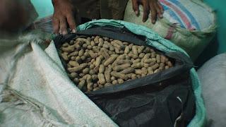 Produsen Kacang Garing Cilegon Binaan PKBL KS