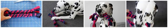 Dalmatian dog playing with homemade fleece dog tug toys