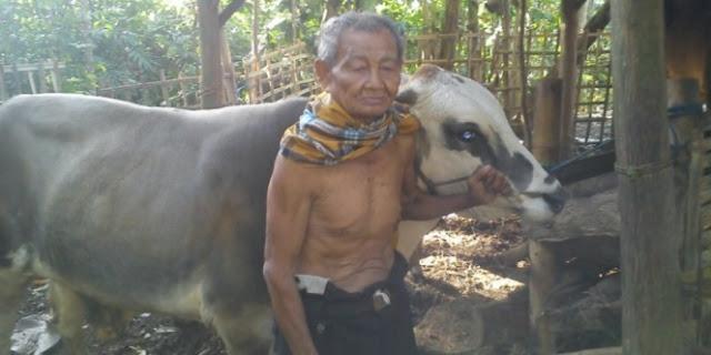 Hidup Sederhana Dan Hanya Jadi Penjual Tape, Kakek Ini Mampu Berkurban Sapi Sendirian
