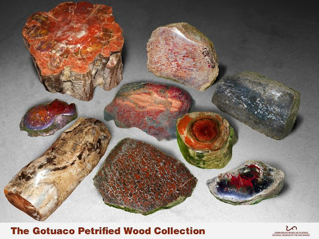 petrified wood collection