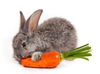 Zorros Conejos Y Zanahorias Actividad Sobre Medio Ambiente Y la gran zanahoria vendrá, ¡aleluya, aleluya al pulento! zorros conejos y zanahorias actividad