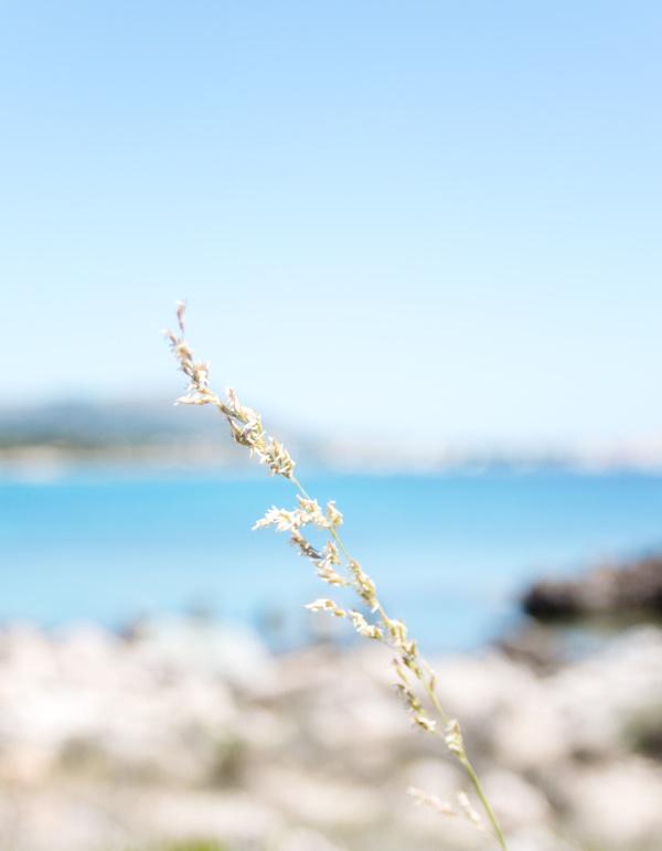 Natur auf Mallorca -  Mein Urlaubsmitbringsel: Rezept für einen mallorquinischen Mandelkuchen by titatoni.de