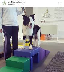 trilha de fisioterapia para cães