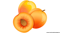 apricot illustrations