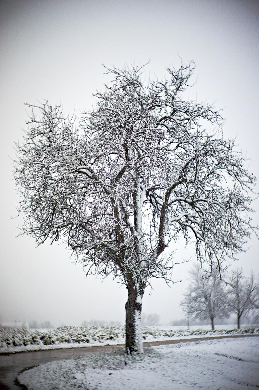 Bild der Woche #54 (KW01/2021) –Bäume (5)