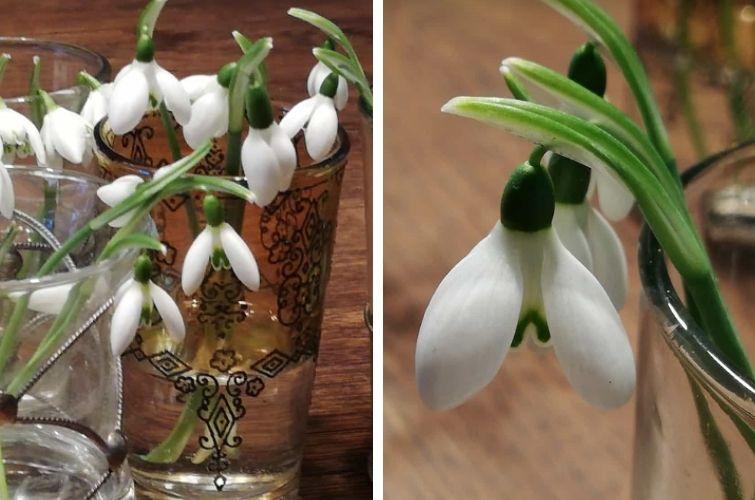 Schneeglöckchen in Minivasen
