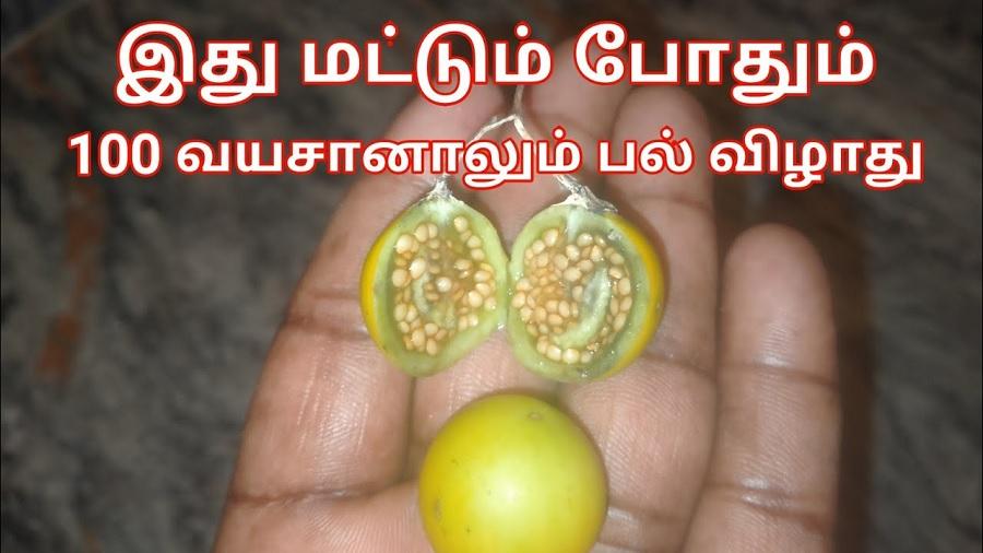 இனி 100 வயசானாலும் பல் கொட்டாது சும்மா பளிச்சுன்னு மின்னும்!