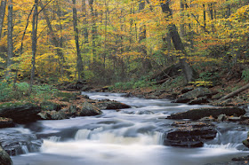 One Month, 5,000 Miles, 150 Photos: Capturing Autumn in Large Format