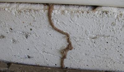 Drywood vs Subterranean termites damage Pictures, Identification