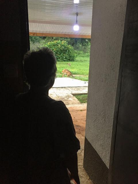 Natura superba, cazarea praf; Mole Motel; Mole National Park, Ghana