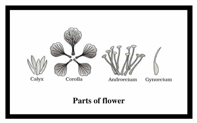 Diagram of a flower and flower parts