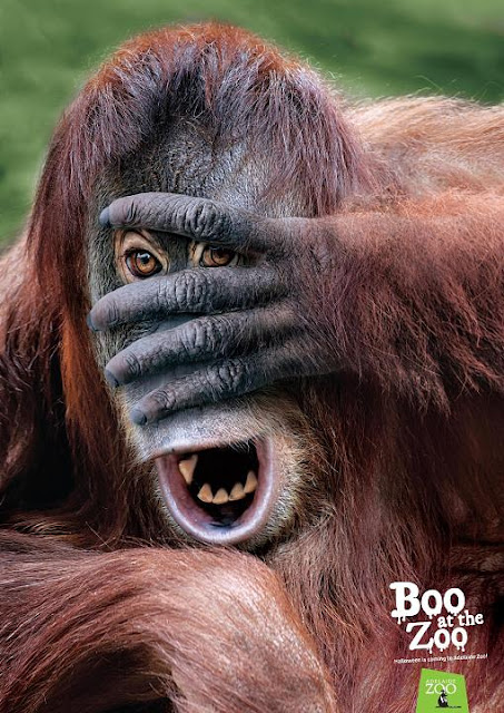Adelaide Zoo Orangutan Advertisement