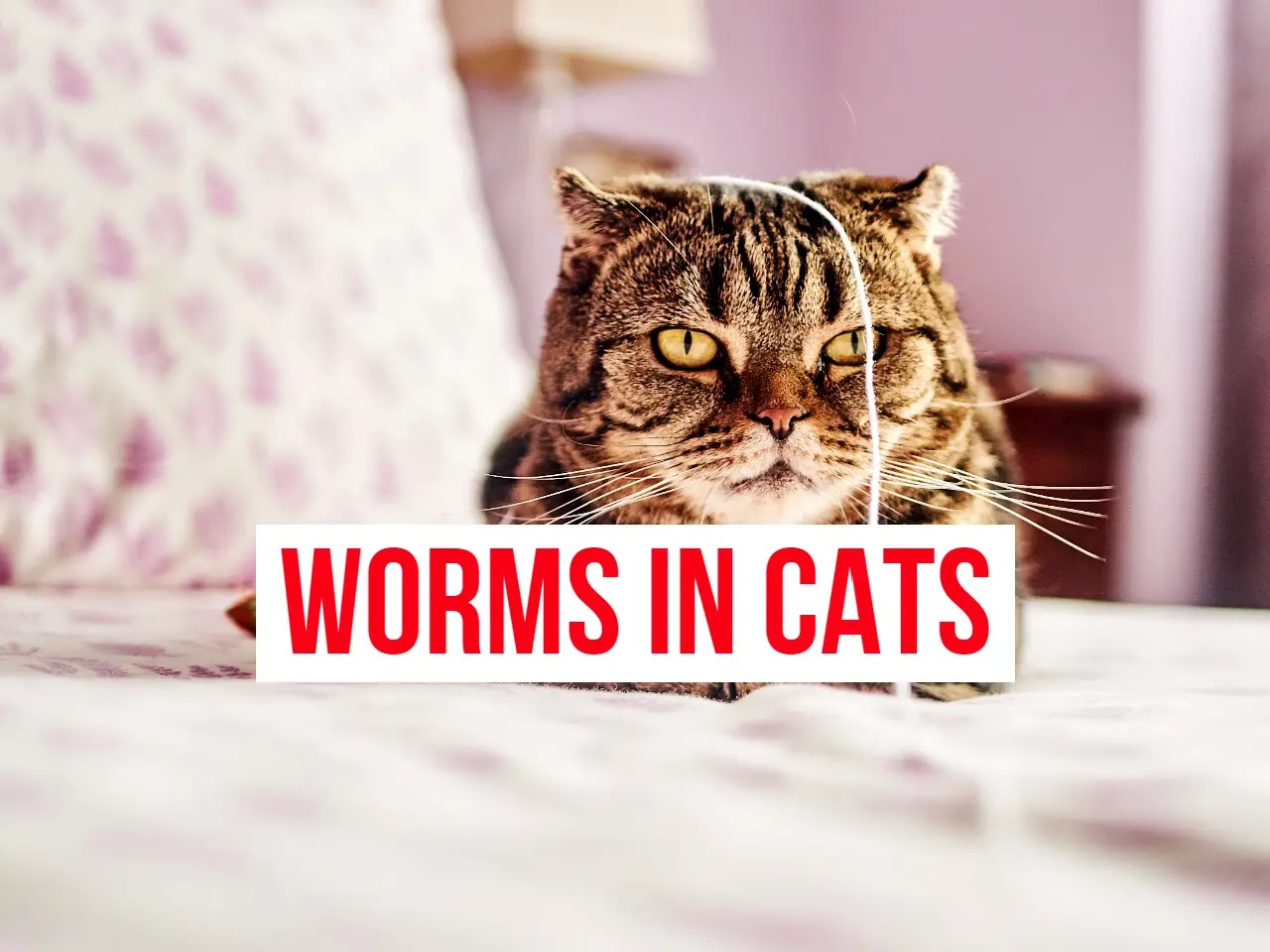Worms in Cats