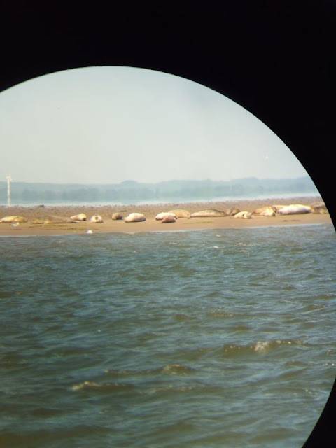 Spannende Touren ins dänische Wattenmeer: Interview mit Betty vom Vadehavscentret in Ribe. Dort kann man auch auf Seehund-Safari gehen.
