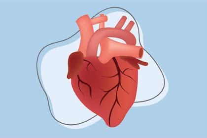 Jantung Koroner Dapat Terjadi Karena