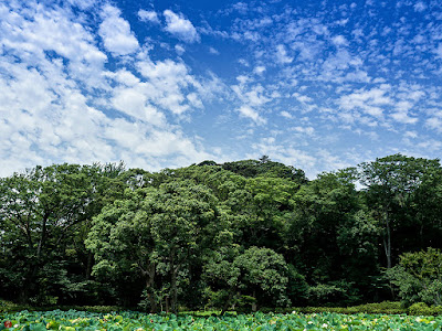Summer blue sky: Tsurugaoka-hachimanbu