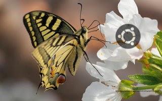 http://diversidadyunpocodetodo.blogspot.com.es/2014/04/fondos-pantalla-wallpapers-ubuntu-naturaleza-insectos-flores.html
