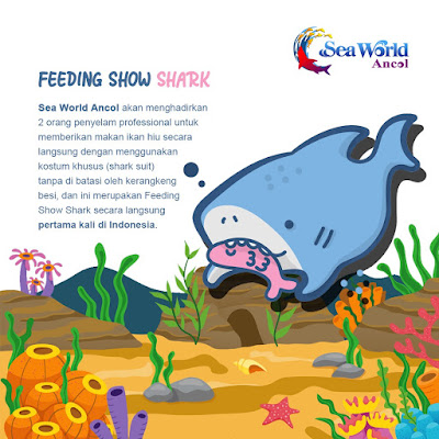 Live feeding shark Seaworld