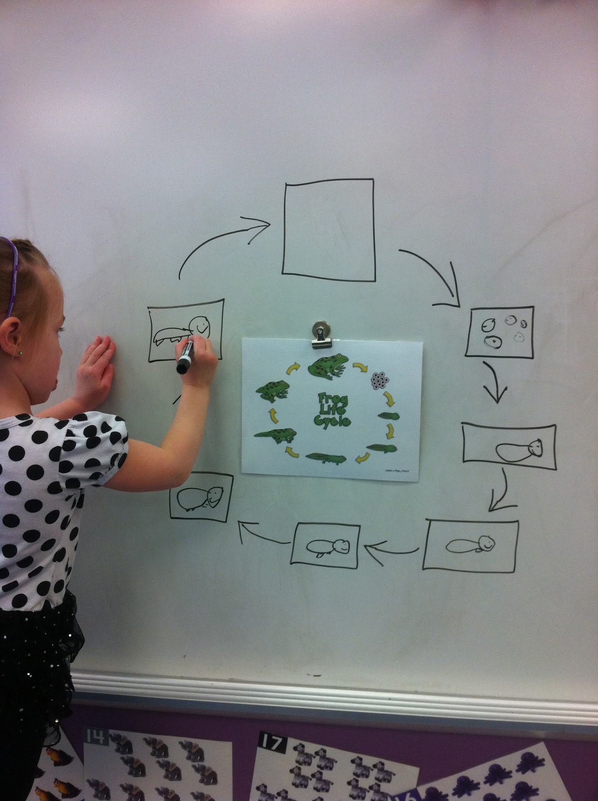 Learn Play Pre K Frog Life Cycle