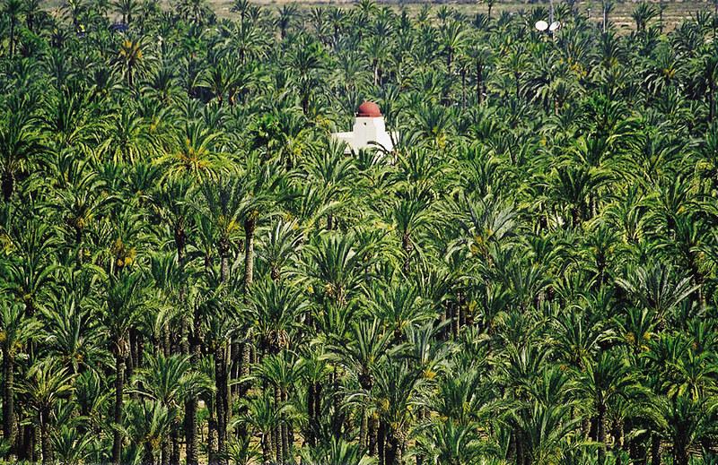 el palmeral; elche palmeral; palmeral de elche huerto del cura; palmeraie elche espagne; hotel alfaros cordoba spain; heritage palmeras; palm iberia; palmeraie elche; elche unesco; palmeral de elche; elche palms; elche wikipedia; palm grove; palm groves of elche;