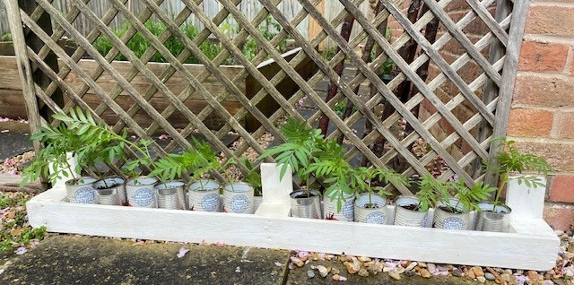 Small simple pallet planted painted white with tin cans