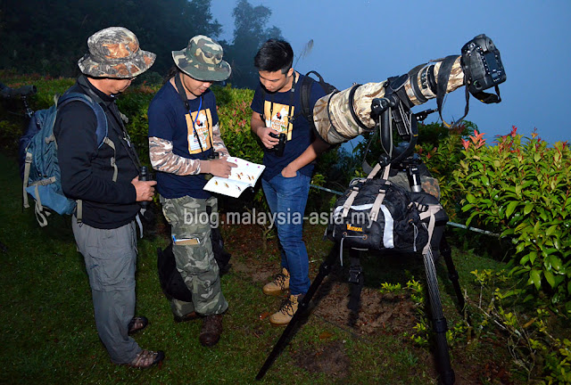 Birding at Borneo Highlands