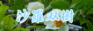 長谷寺の沙羅双樹