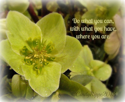 Theodore Roosevelt quote, Helleborus Flowers, Green flowers, water drops, details, do what you can, Florals-Family-Faith, Cindy Rippe