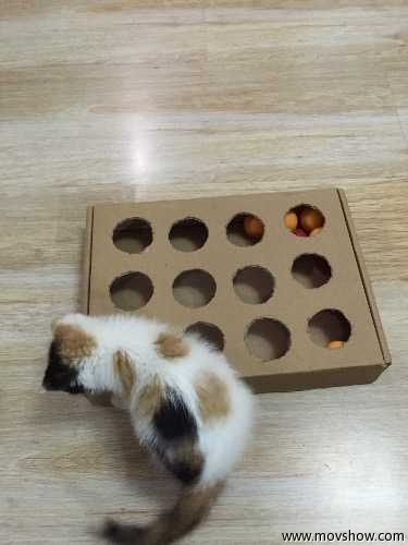 Diy Peek And Play Toy Box For Cat Best Cat Toy Ever