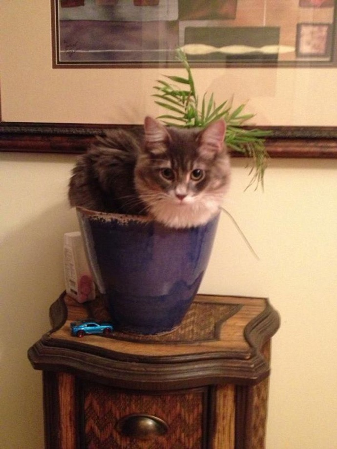 10. Ah, the domestic house plant cat.
