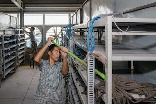 Чтобы предотвратить попадание пыли в здания, они окружены плотным забором
