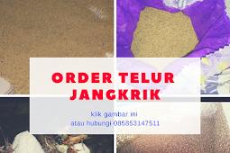 Jual Telur Jangkrik Banjarnegara Hubungi 085853147511
