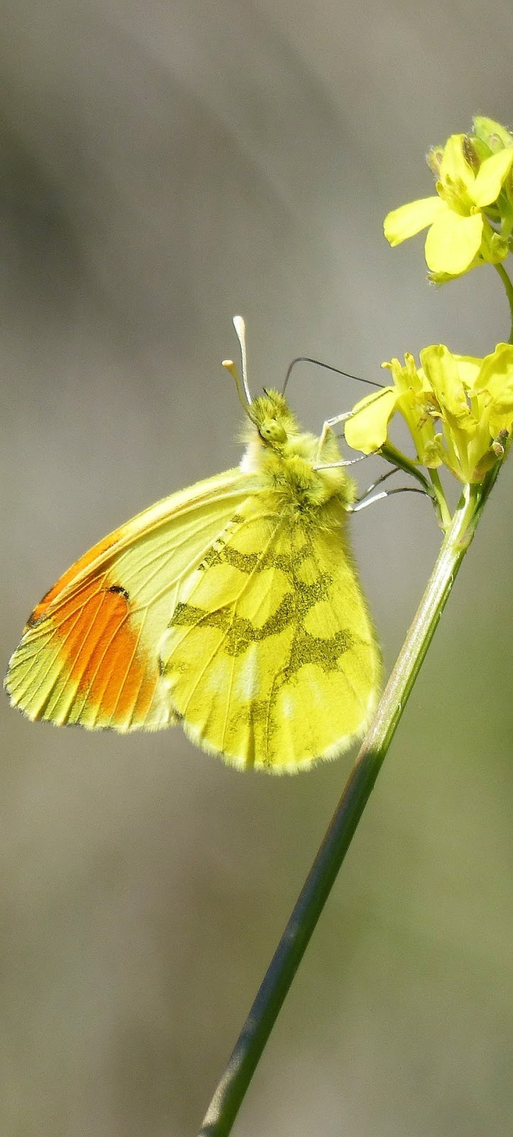Colorful yellow butterfly.