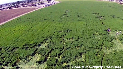 UFO-Style Mysterious Crop Patterns in Texcoco, Mexico