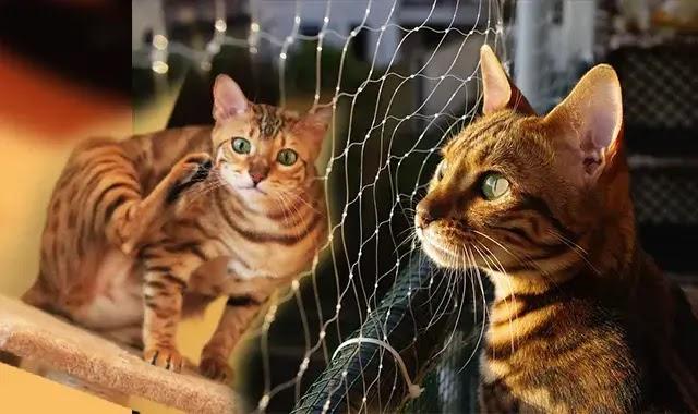 Les Chats Du Bengale Sont-Ils De Bons Animaux De Compagnie