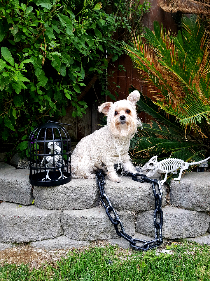 Mummy Dog Halloween Costume Idea- 5 Budget Friendly Pet Costume Ideas #DoThe99 #99Obessed #AD