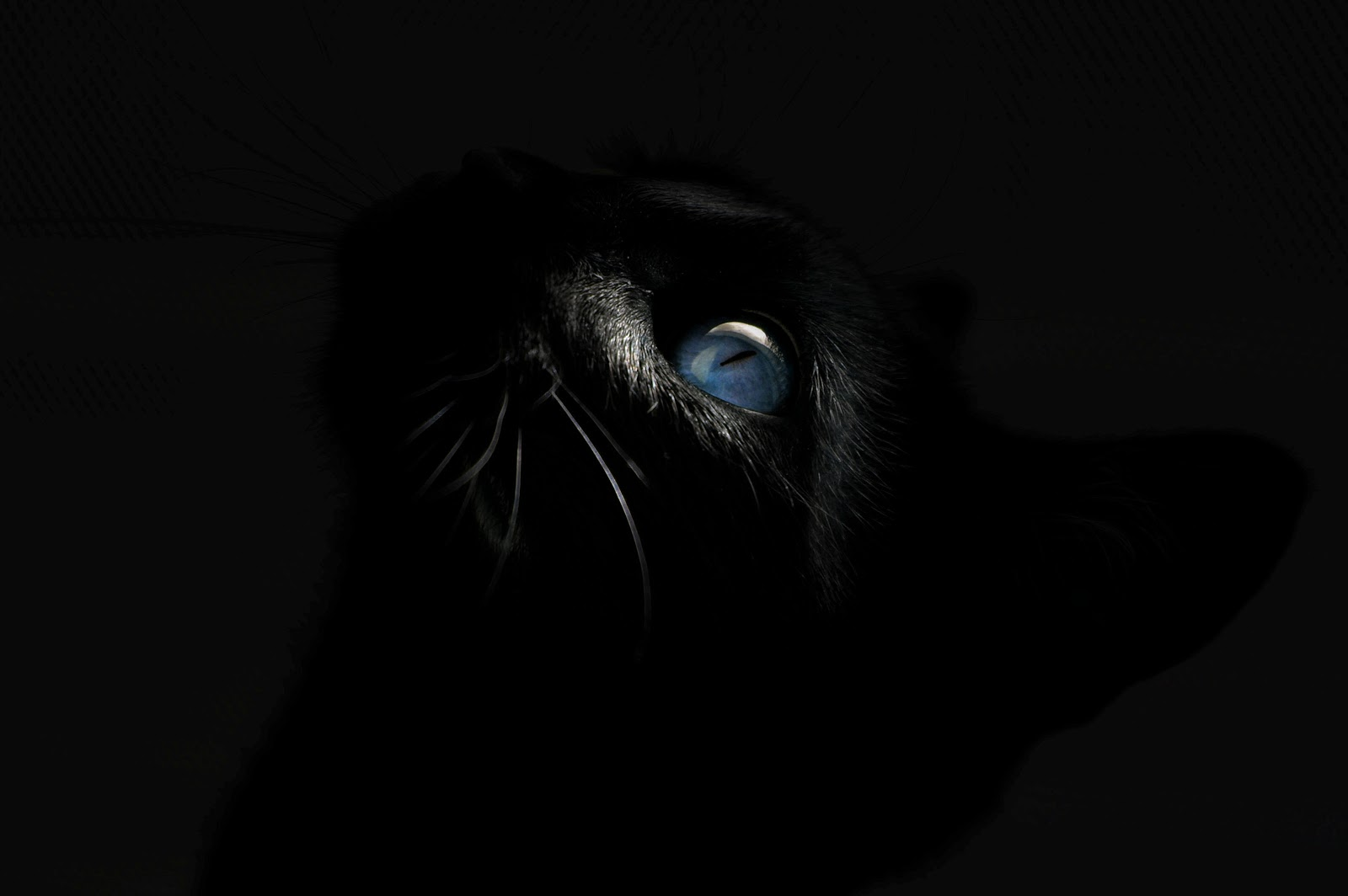 dark black cat blue eyes