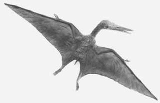 Pterosaurus yang bisa terbang di angkasa (Pteranodon)