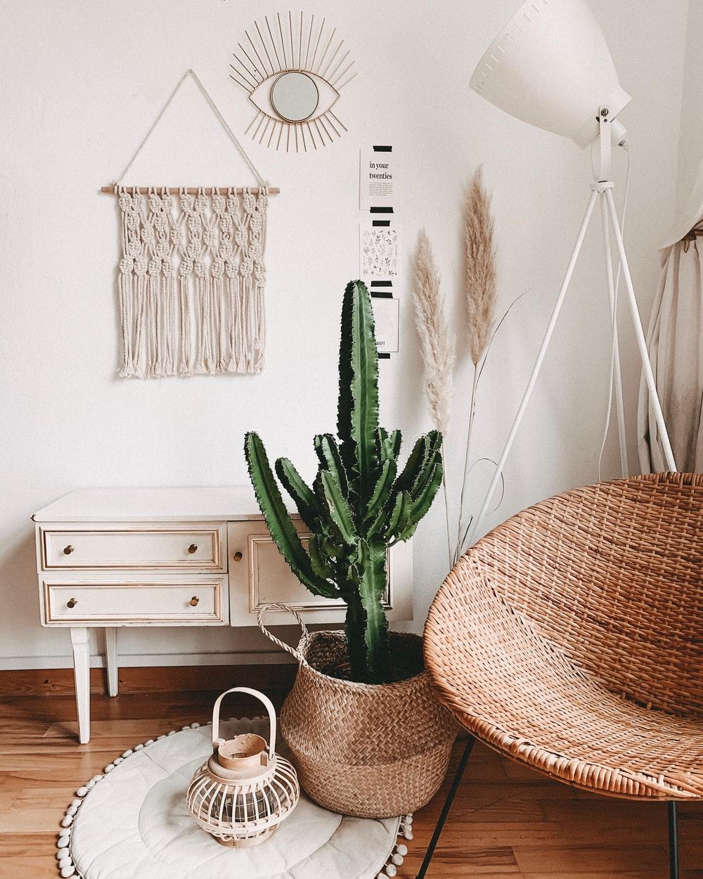 Decorar con cactus, las plantas con superpoderes_15