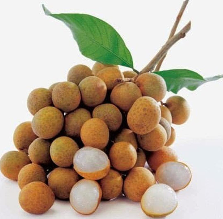 benih buah kelengkeng diamond river 6 seed Medan