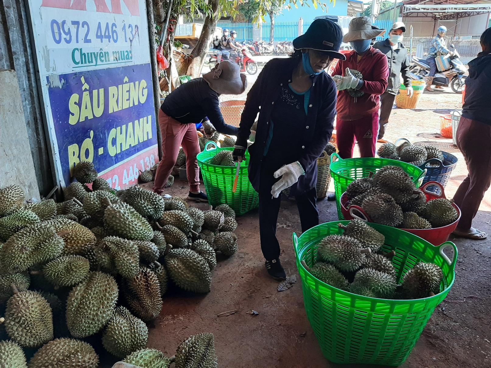 Một đại lý thu mua sầu riêng, bơ ở H.Krông Pắk (Đắk Lắk). Ảnh: Trung Chuyên
