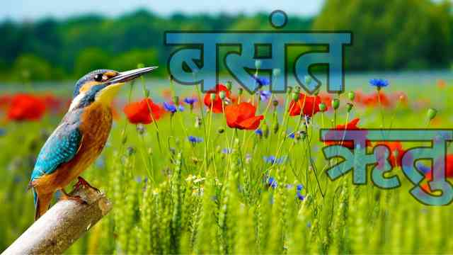 वसंत ऋतु वर मराठी निबंध | Spring season essay in Marathi.