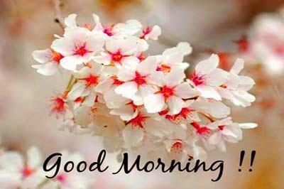 Life is Mirror-Good Morning SMS (ChhondoMela)