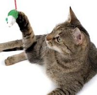 A brown tabby cat with a mouse toy