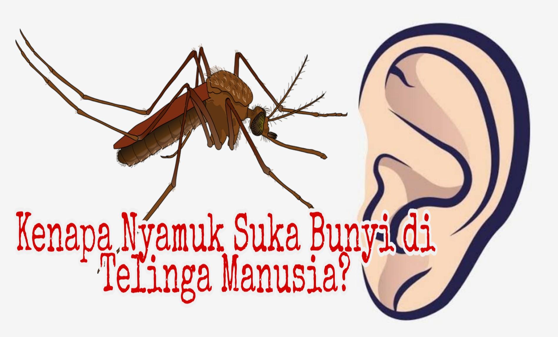 Kenapa Nyamuk Suka Bunyi di Telinga Manusia?