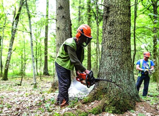 Arti Mimpi Lengkap Tentang Menebang Pohon