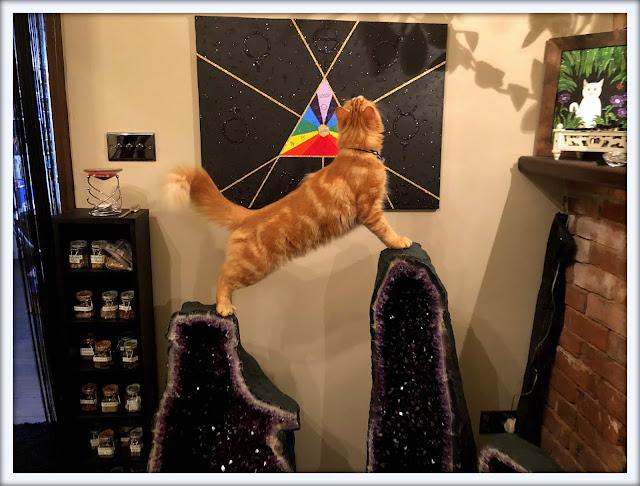 Mandalas on Monday ©BionicBasil® Colouring With Cats Mandala #112  Fudge Enjoying Amethyst Climbing