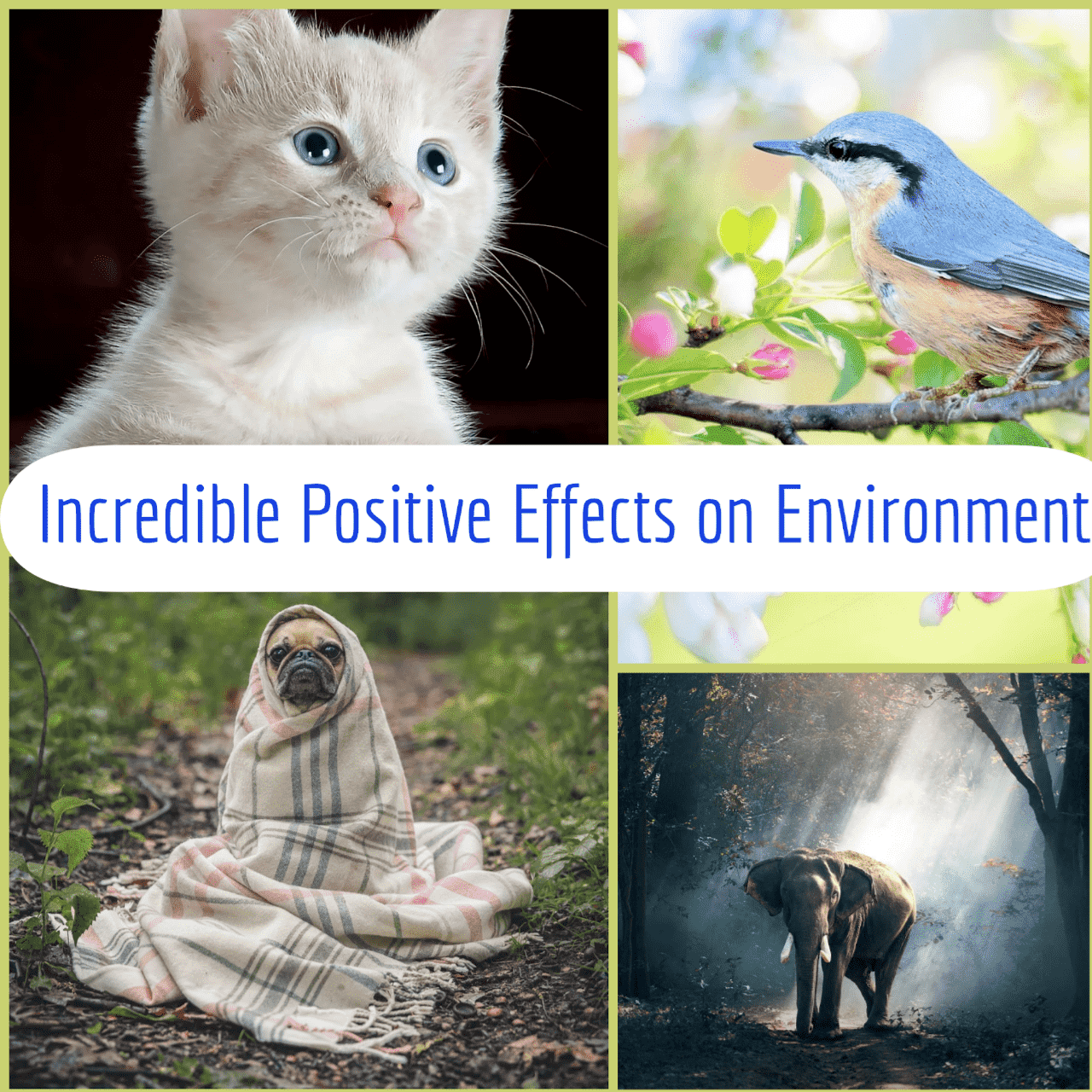 Incredible Positive Effects on Environment