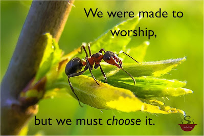 Black ant with red on edges on the leaf of a branch surrounded by the lettering: We were made to worship, but we must CHOOSE it.